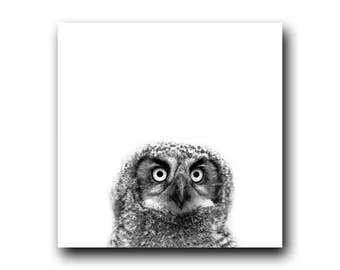 Great Horned Owl Print, Bird Art, Home Decor, Wild Owl, Owlet Photo, Owlet Print, Black and White, Animal Print, Animal Art, Living Room Art