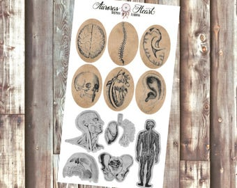 Anatomy Oval Shapes Vintage planner stickers