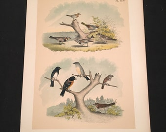 Buntings and Flycatchers - Plate XCIV, Original Color Lithograph by Jasper, 1881 Edition of the Birds of North America