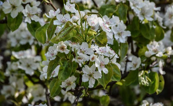 "Nature, ""Spring Blossom"", Nature Photography, Spring, Flowers, WIld flowers, Fine Art Photography, Spring Blossom, Wall Decor, Wall Art"