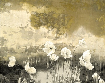 Poppies Remembered, limited edition archival pigment print