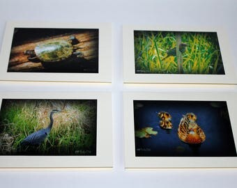 All Occasion Blank Cards - Birds and turtles, oh my! - Set of 4 Photo Cards