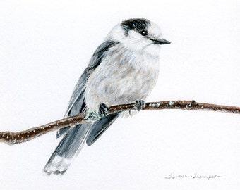 National bird of Canada, Gray Jay original painting, Algonquin Bird, bird painting, bird art, bird decor, Canadian Art, Canadian bird