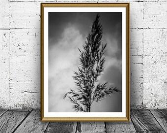 Botanical Print, Minimal Nature Print, Bent Print, Grass Photo, Black And White, Home Decor, Nursery Print