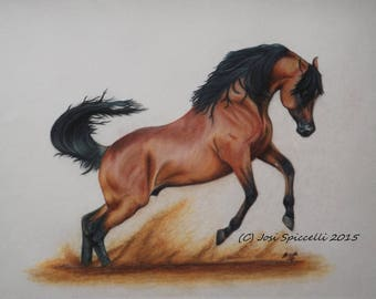 Original Arabian Stallion Drawing - Majesty