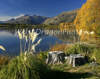 New Zealand Landscape, Lake Hayes, Digital Download, Landscape Photography, Travel Photography, NZ South Island, Reflection Photograph