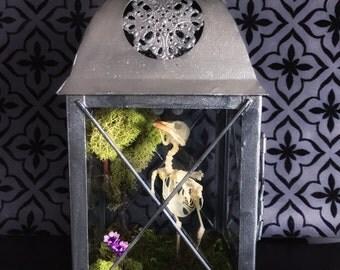 RESERVED FOR kgosselin83*** Victorian Bird Skeleton Lantern, Taxidermy, Bird Taxidermy, Victorian, Memento Mori, Gothic Decor