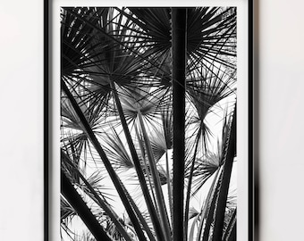 Printable Leaf Palm, Black and White Tropical Photography, Tropical Leaves, Summer Vibe Print, Palm Leaf Photography