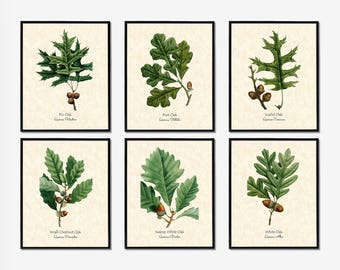Botanical Print Set, Herb Prints, Botanical Printables, Herb Printables, Botanical Prints, Kitchen Prints, Herb Print Sets, Herb Set of 6