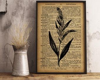 Botanical Art Decor, Broad-Leaved Pepperwort Dictionary Art Print, Botanical Illustration, Vintage Wall Art, Nature botanical print, (F04)