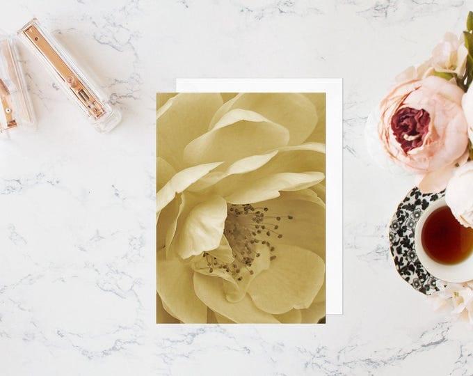 Cream Rose Floral Card & Set