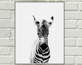 Baby Zebra Print,Foal Print,Printable Horse Poster,Zebra Foal,Modern Minimalist Nursery Wall Art Print,Cute Nursery Animal Art,Baby Room Art