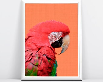 Red Parrot Print, Bird Print, Tropical Parrot Wall Art, Tropical Decor, Printable Art, Colourful Bright, Bird Photography, Parrot Photo