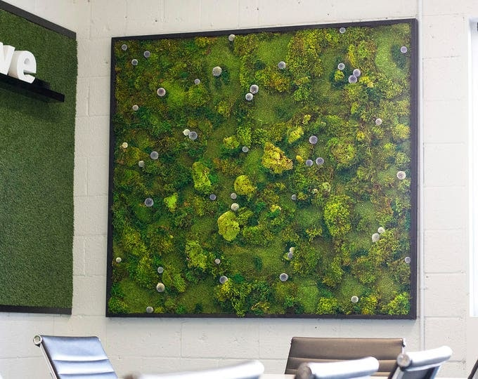 "Moss Wall Art ~ Moss Art Work ~ REAL Preserved Moss ~ No Maintenance Required Moss ""Living"" Wall ~ 60x60"" ~ ""Blue Dot"""