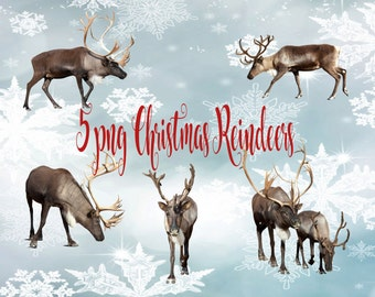 Christmas Reindeer Overlays, Instant Download, PNG files