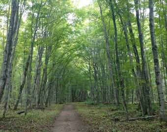 A Walk Through a Michigan Forest