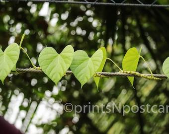 Instant Digital Download *Love Heart Leaves* Fine Art Printable Photography - Photo Print / Wallpaper / Backdrop