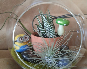 5.5 inch glass globe terrarium with zebra cactus and two airplants, perfect for Mother's Day or Father's Day