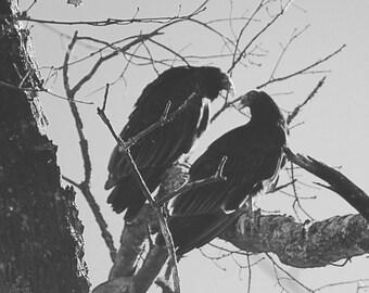 Vulture Kiss
