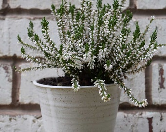Plant pot *Made to order*  Handmade ceramic windowsill herb pot. hand crafted pottery with a white speckled stoneware glaze