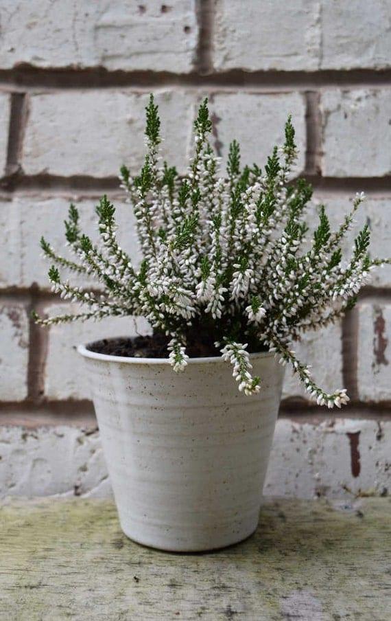 Plant Pot Made To Order Handmade Ceramic Windowsill Herb