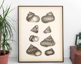 Shell print vintage, Printable nautical print, Antique nautical print, Shell printable, Instant download vintage, 8x10, 11x14 wall art, JPG