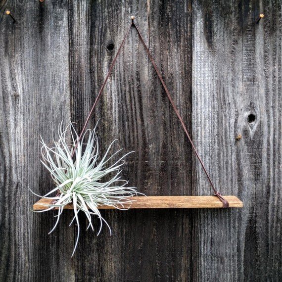 Hanging Wood Air Plant Holder with Large Air Plant ...