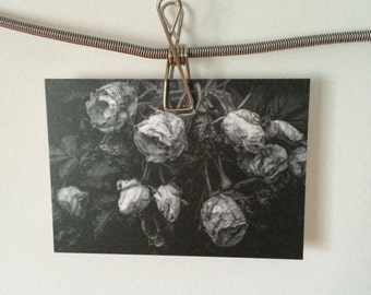 Black And White Melancholy Romantic Withered Roses Original Art Photography Postcard Print