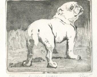 """original etching """"White Bulldog"""""""