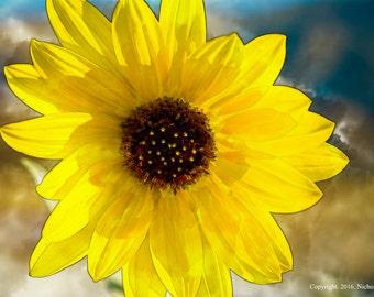 Wild Sunflower - Watercolor Effect Photo