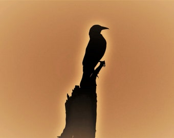 "Pond House Birds Silhouette Greeting Card- ""Courage"""