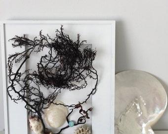 Coastal, seashells, seaweed display