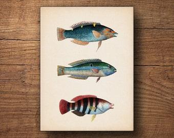Tropical Fish Print on Canvas, Fish Decor, Fish Wall Art, Coastal Art, Coastal Prints, Canvas Print, Nautical Print, Beach Art, Tropical Art