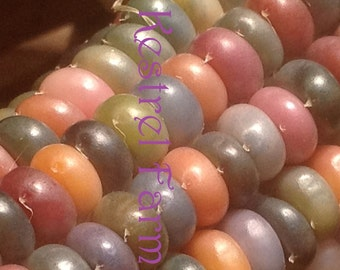 Glass Gem Corn 100+ seeds harvested 2016 - See my photo gallery! Buy 3 Get 1 FREE!  FREE shipping!
