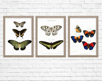 Butterfly Poster, Group of 3, Antique Butterfly Print, Nature Art, Nature Art Print, Butterfly Art, Natural History Print Nature Wall Art
