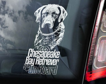 Chesapeake Bay Retriever on Board - Car Window Sticker - Chessie CBR Dog Sign Decal - V01