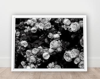 Printable Art, Rose Photo, Digital Download, Black And White Flower, Rose Bush Printable, Rose Art Print, Garden Rose Wall Art, Gallery Wall