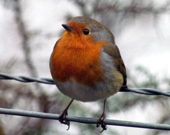 Robin Wildlife Photography Card