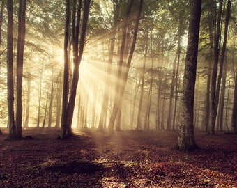 Back-light from sunlight between trees in a natural forest. Photo art gallery for decoration