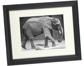 elephant photography photography prints home decor makes a great gift