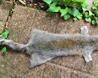Tanned grey squirrel cased skin fur hide 3