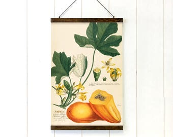 Pull Down Chart, Papaya Botanical, Educational Chart Diagram, Tropical Decor, Tropical Art, Tropical Style, 20x27