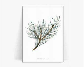 pine tree watercolor botanical poster print/pine leaf print/plant print/herb pine poster herb/botanical print pine tree watercolor/pine leaf