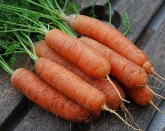 Little Fingers Carrot Seeds-Organic-NON-GMO-Vegetable Seeds