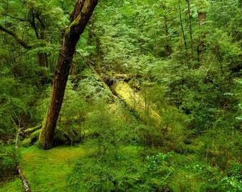 New Zealand Fallen Tree