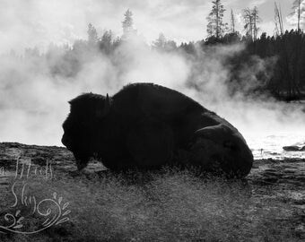 Buffalo/ Yellowstone/ Digital Download/Digital Image