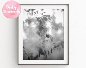 SPRING BLOOM > Photograph > Print > Digital Download Photo >Tree -Nature -Flower -Black & White -Fine Art -Wall Art -Home Decor -Photography