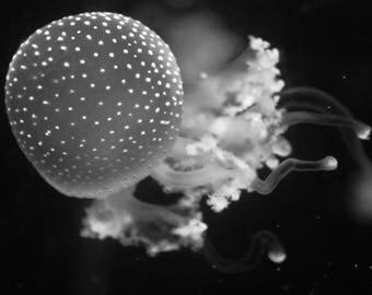 Jellyfish black and white photographic print
