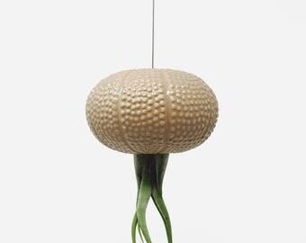 Hanging Pink Jellyfish Air Plant Sea Urchin