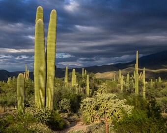 Overcast Sonoran Desert